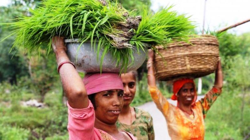 किसान की आय कैसे दोगुनी करेगी सरकार?
