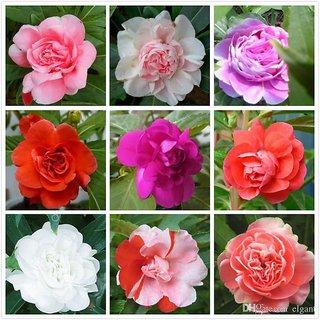 फूलों की जुबां से प्यार का इजहार
