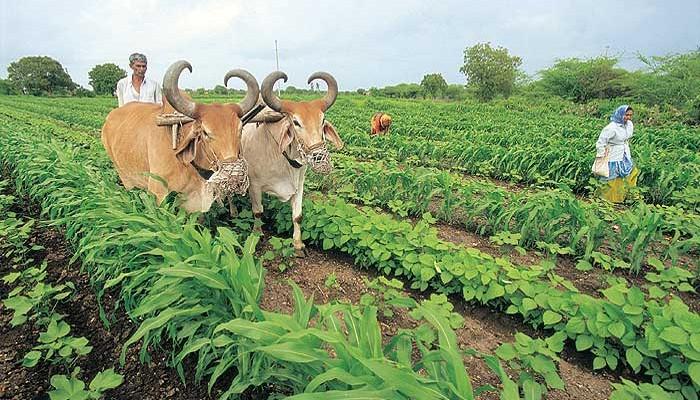 तीन लाख तक कर्ज लेने पर किसानों से कोई शुल्क नहीं