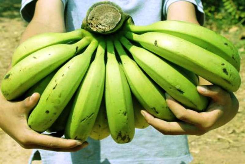 वजन कम करने से लेकर डाइजेशन को बेहतर बनाता है कच्चा केला